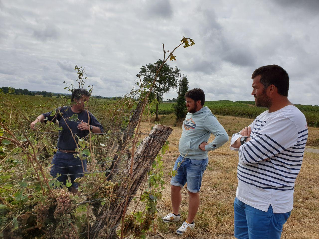 Visite en urgence auprès des viticulteurs gersois touchés par la grêle