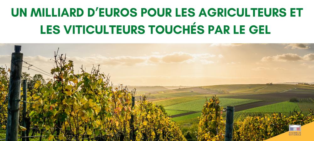 Plan Gel : un milliard d'euros pour les agriculteurs et les viticulteurs touchés par le gel au printemps 2021